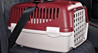 Como transportar um cachorro da forma correta em seu carro