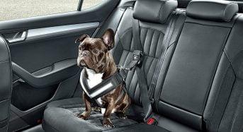 Como transportar um animal em segurança no carro?